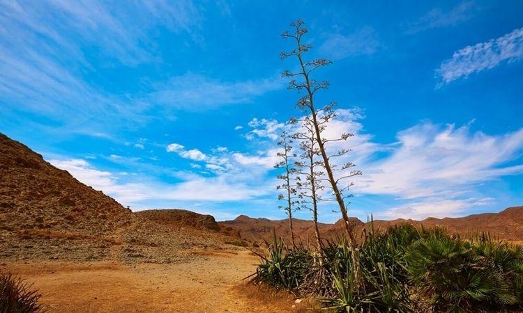 Boca de los Frailes (Cabo de Gata)