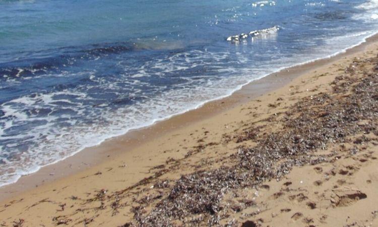 Playa El Ancón (Cabo de Gata)