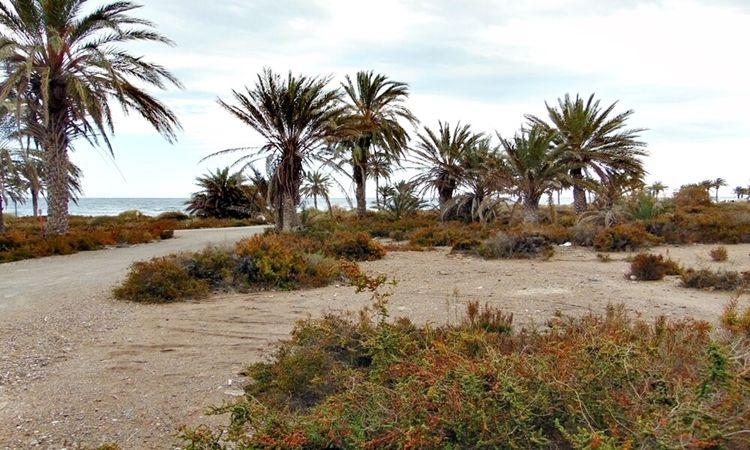 Playa de La Ventilla (Roquetas de Mar)