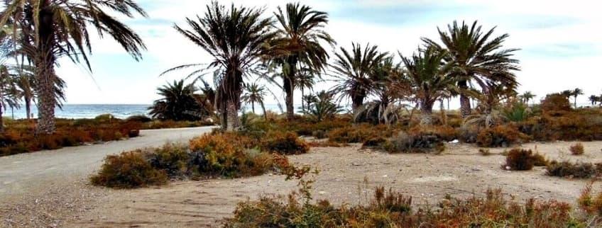 Los Bajos (Roquetas de Mar - Almería)