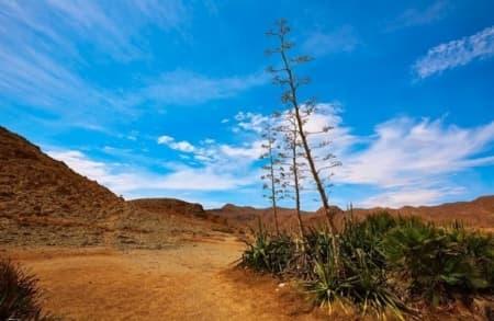 Cabo de Gata Flora