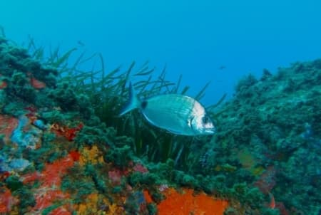 Cabo de Gata seabed