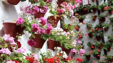 Patio andaluz con flores